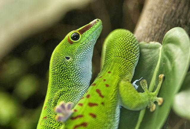 Madagascar : un des plus riches pays au monde en biodiversité