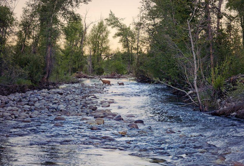 Retrouvez le rythme de la nature, où faune et flore suivent les saisons.