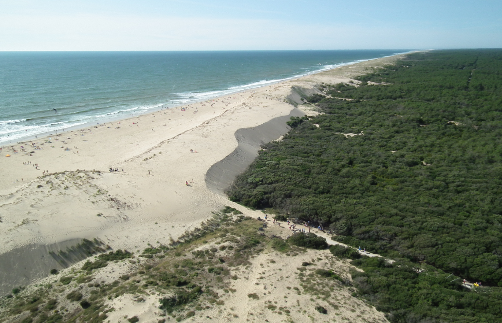 Plage de sable blanc et forêt de la Coudre sur la Presqu'île d'Arvert