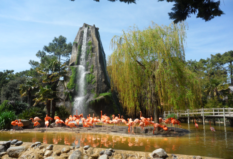 Bassin des flamants roses au Zoo de La Palmyre en Charente-Maritime